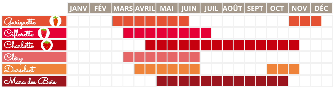 calendrier de production des fraises françaises