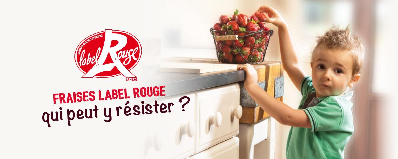 fraises label rouge qui peut y résister ?