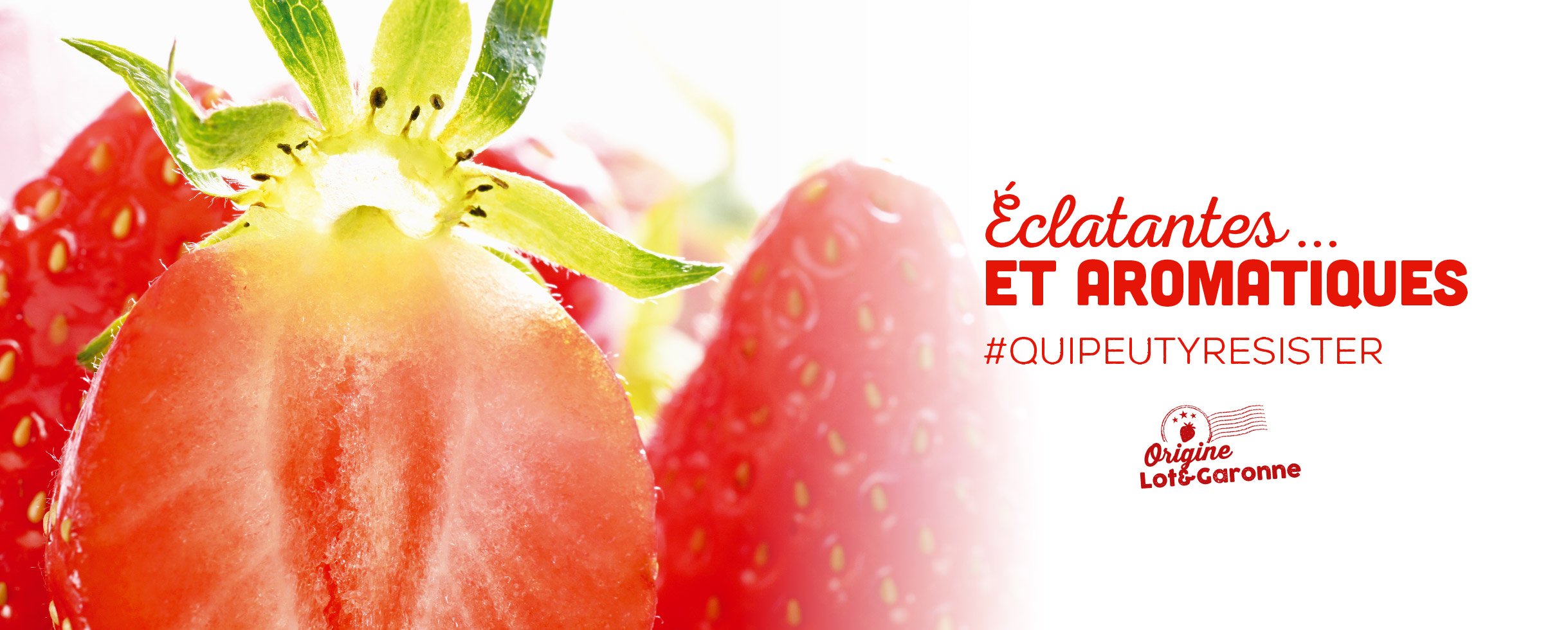fraises label rouge, éclatantes et aromatiques