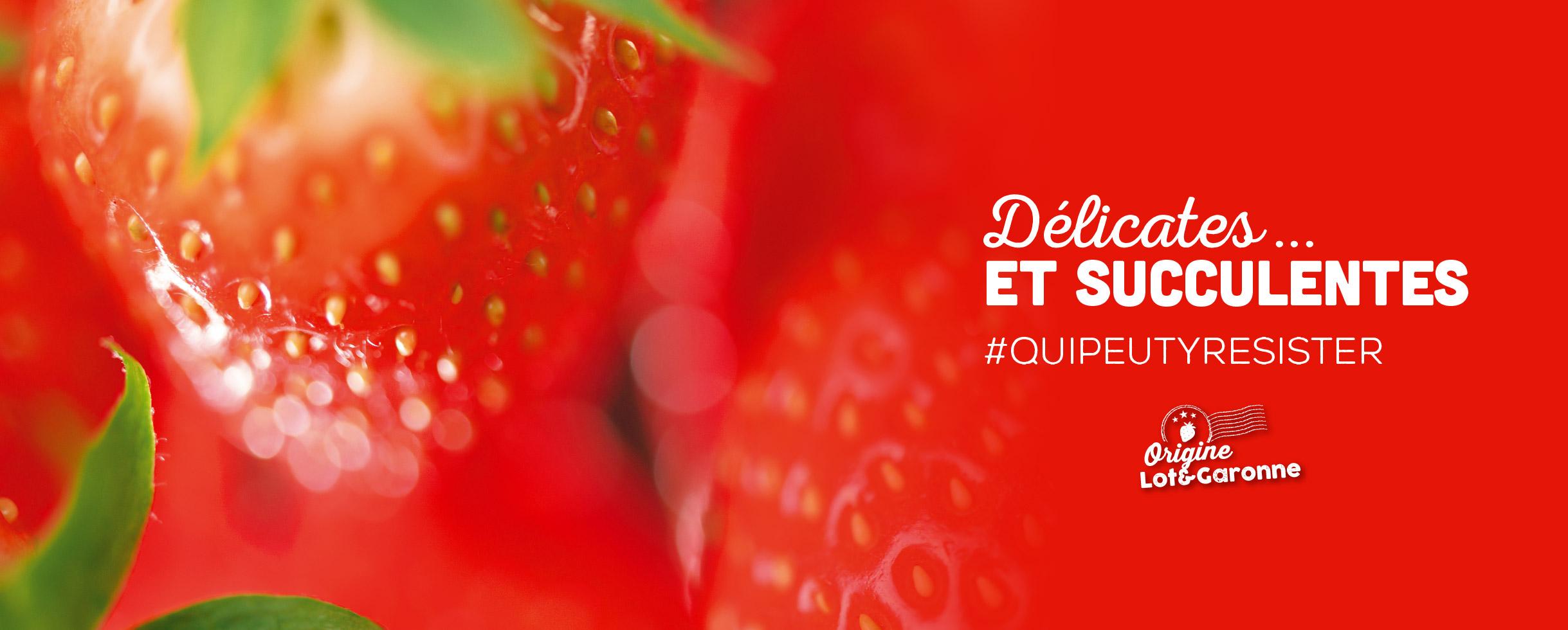 fraises label rouge, délicates et succulentes